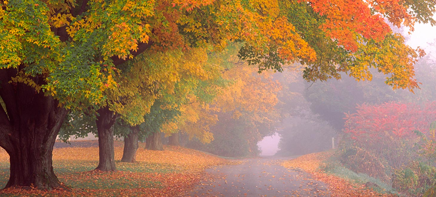 Road surrounded by trees in the fall