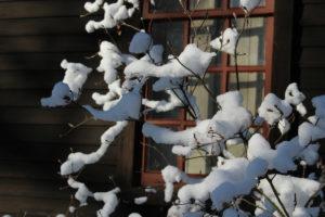 Snow in Deerfield, MA